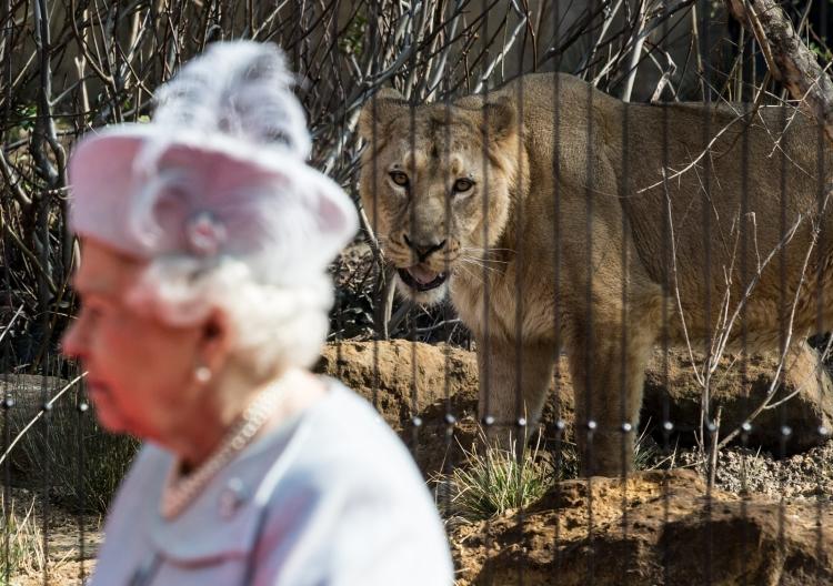 Queen Elizabeth II and an Asiatic Lion
