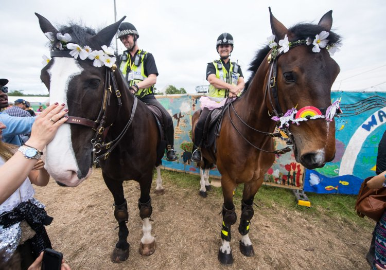 Decorated Police horses